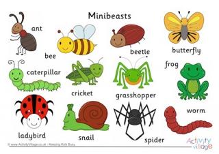 Minibeast Vocabulary