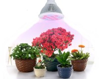 Best Artificial Grow Lights for Indoor Plants