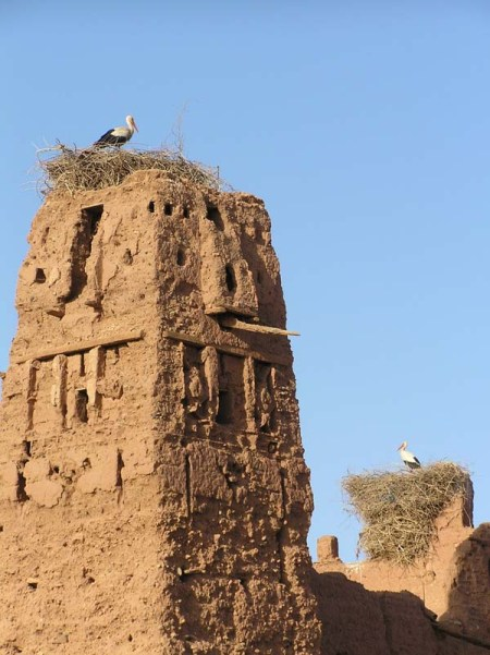 Storks in Marrakech