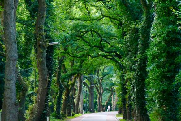 Visit Arnhem