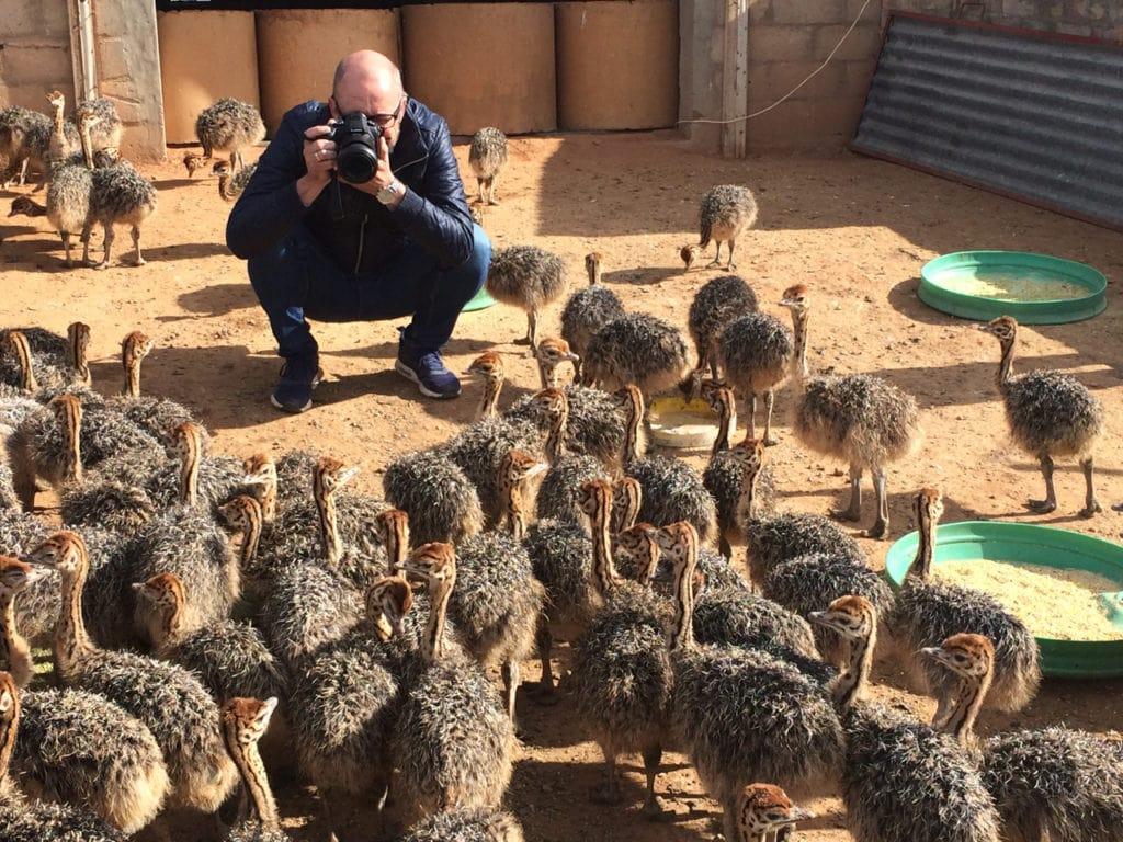 Photo ostriches
