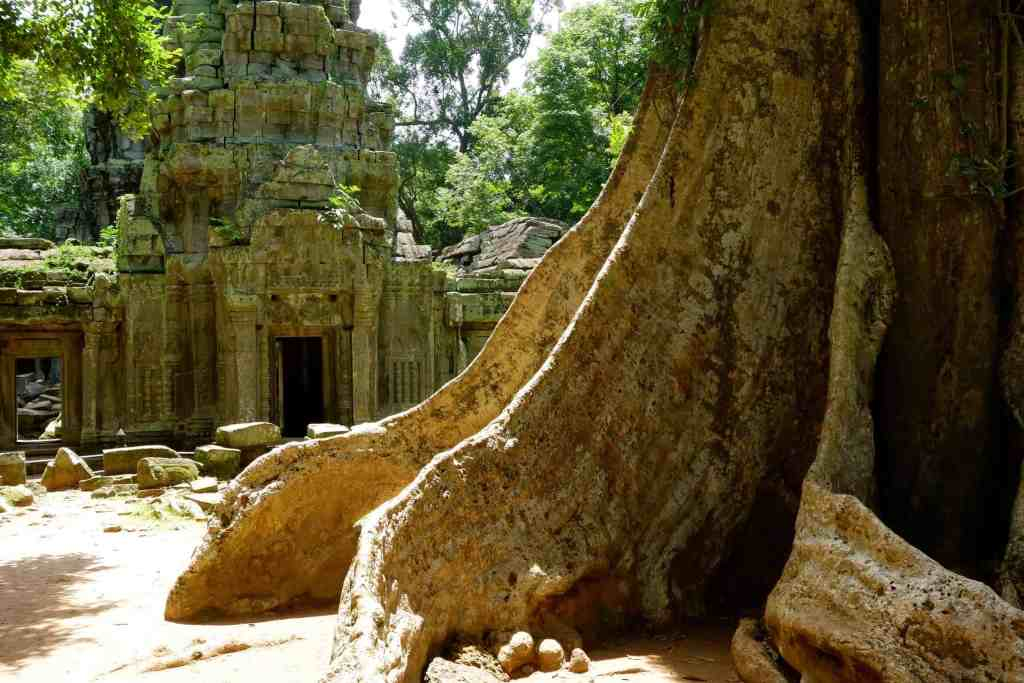 Enormous tree roots Ta Prohm