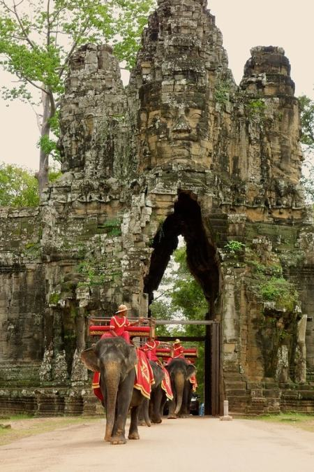 Elephants passing entrance gate Angkor