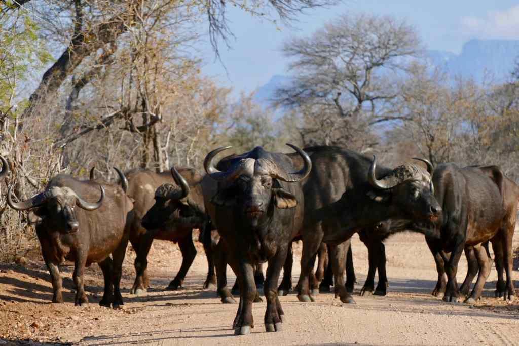 South Africa Kruger Park new