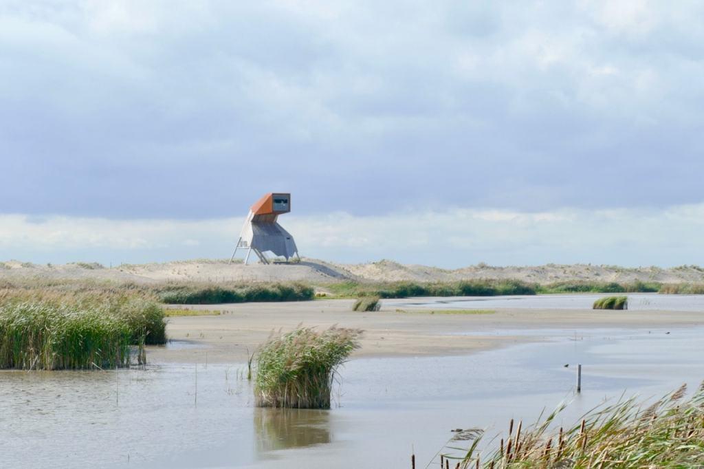 Steltloper bird view spot