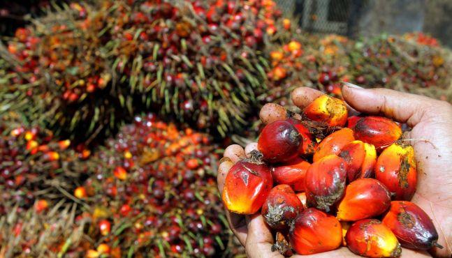Huile de palme : vers une « taxe Nutella » dès 2017
