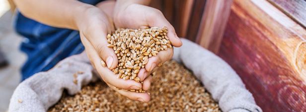 Le sale coup porté par la loi biodiversité aux échanges de semences entre jardiniers amateurs