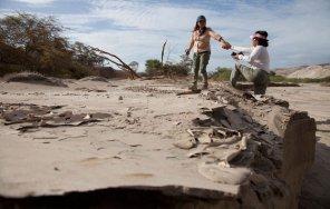 Evelyn Ruiz y Consuelo Borda, son parte de este grupo de jóvenes que dedican su tiempo a la conservación de la biodiversidad del desierto. A donde fuimos, las vimos recogiendo semillas que luego servirían para fines de reforestación.