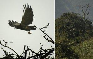 También se han identificado zorros, venados, más de 70 especies de aves, murciélagos y diversidad de reptiles e insectos.