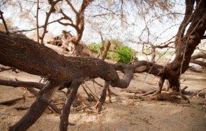 Se trata de una zona que alberga relictos de bosques de huarango y flora asociada que han sobrevivido al paso del tiempo y al avance de las dunas. Se calcula que solo queda 1.5% de los bosques de huarangos que en el pasado daban sombra y alimento en el desierto de Ica.