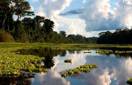 Reserva Nacional Pacaya Camiria. Foto: Thomas Müller