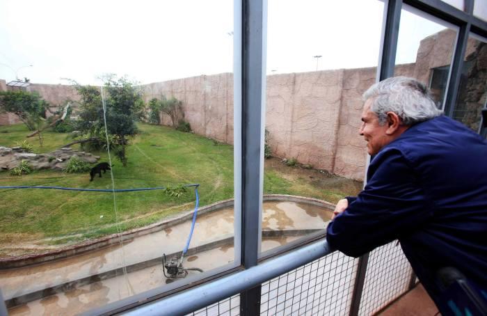 tigre_parque_leyendas_municipalidad_lima_003