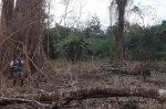 deforestación_serfor