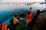 Actividad pesquera_Sernanp
