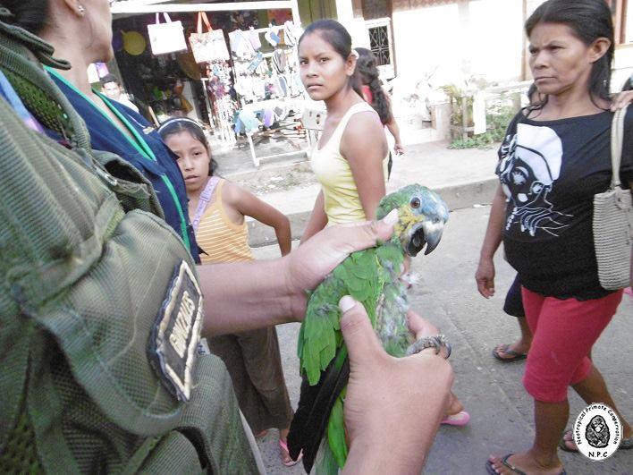 trafico_fauna_silvestre_vado_yurimaguas_loreto_actualidad_ambiental_7