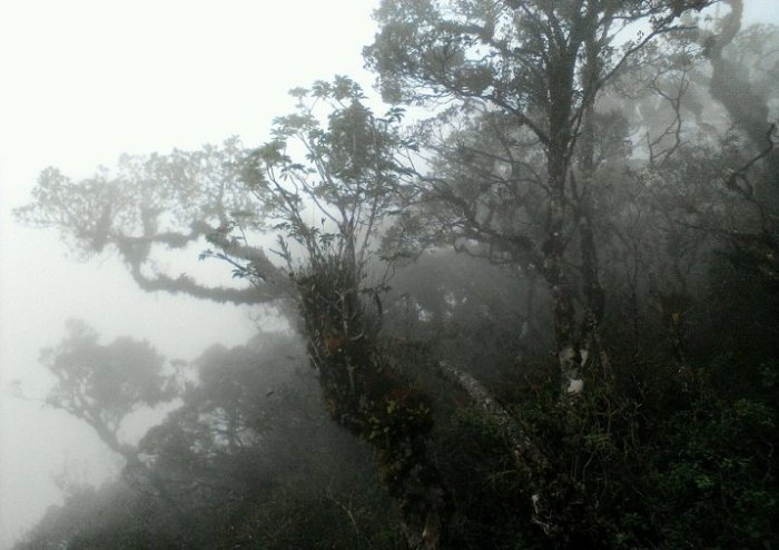 acp bosques de dotor 1