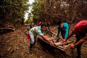 Los habitantes de Tres Esquinas trabajan organizados en la APPA Los Cocodrilos. Dagoberto y sus compañeros empujan un pequepeque para llevarlo a las cochas cercanas.