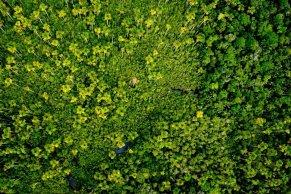 Por ser un lugar único en la Amazonía, con una gran biodiversidad, una comisión multisectorial ha determinado que debe ser categorizado como Parque Nacional. Su protección es clave para asegurar la sostenibilidad de la flora y fauna que alberga. Foto: Álvaro del Campo – Field Museum