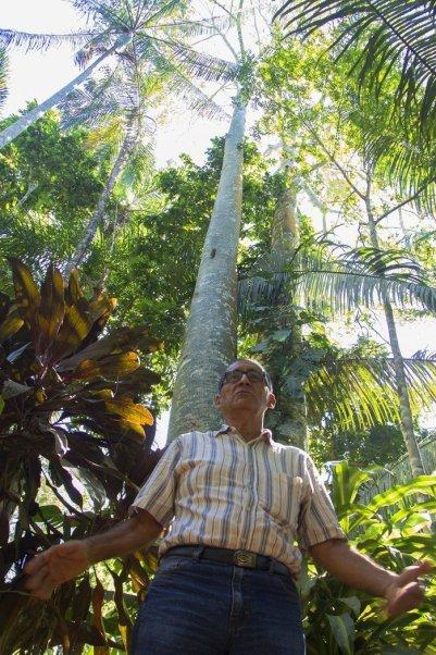 Víctor Zambrano con árboles de lupuna