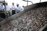 pesca anchoveta - agencia andina