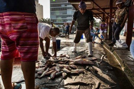 A pesar de la contaminación y la sobrepesca, todavía tenemos un mar productivo cerca a Lima. En la bahía de Ancón todos los días se encuentra pescado fresco y a buen precio.