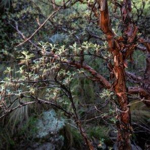 """Bosques de Polylepis de Lampa En la ciudad de Lampa, se encuentra la """"Capilla Sixtina de América"""" donde se está la réplica de La Piedad de Miguel Ángel. El Bosque de Polylepis de Lampa se caracteriza por sus bosques de queñua y tiene fauna representativa como zorro andino, vizcacha y aves."""