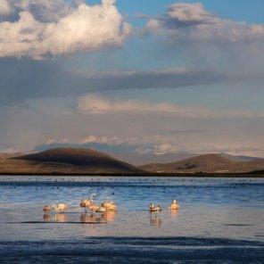Laguna Orurillo Ubicado en la provincia de Melgar, en la Laguna Orurillo hay especies de fauna como flamenco chileno, patos y zambullidor del Titicaca y de flora como totora y tola.