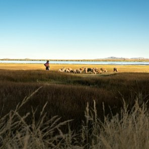 Laguna Arapa Aves como flamenco chileno, patos y zambullidor del Titicaca se encuentran en esta la Laguna Arapa, ubicada en la provincia de Azángaro. Además de flora representativa como la totora.