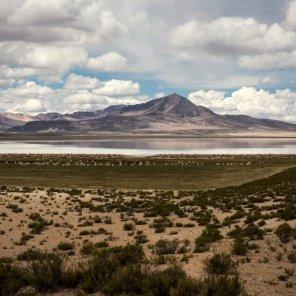 Lagunas Altoandinas Ubicado entre las provincias de El Collao, Puno y Chucuito, el Sitio Prioritario Lagunas Altoandinas está habitado por poblaciones que ancestralmente crían alpaca. Se puede encontrar gato andino, zorro andino, puma, suri, vicuña, taruca, vizcacha y flamencos.
