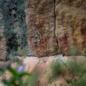 Parani - Coasa En el Sitio Prioritario Parani – Coasa, ubicado entre los 691 m.s.n.m. y los 5217 m.s.n.m., se encuentra arte rupestre, asentamientos preíncas, caminos prehispánicos y chullpas. Alberga especies como puma, oso andino, gato andino, cóndor, guacamayo militar y vicuña.