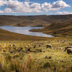 Laguna Lagunillas En el Sitio Prioritario Laguna Lagunillas existen flamencos, patos y la rana gigante del Titicaca, la cual acaba de ser aceptada en el Apéndice I de Cites, para asegurar su protección.