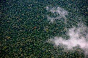 Protección de bosques. Según Sernanp, entre el 2013 y 2015 se generó S/. 114 millones como resultado de los proyectos de Reducción de Emisiones por Deforestación y Degradación de Bosques (REDD+) en cuatro áreas naturales protegidas (Parque Nacional Cordillera Azul, la Reserva Nacional Tambopata, el Parque Nacional Bahuaja Sonene y el Bosque de Protección Alto Mayo). Foto: Thomas Müller / SPDA.