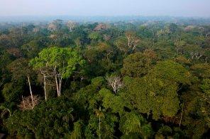 Los proyectos REDD+ otorgan un valor económico al carbono forestal que almacenan los bosques, haciendo que valgan más en pie que deforestados. Foto: Thomas Müller / SPDA.
