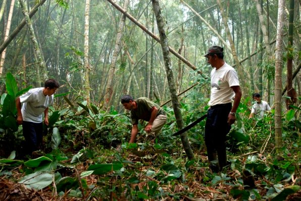 Familias beneficiadas. El dinero recaudado ha permitido que 200 familias en el Bosque de Protección Alto Mayo obtengan la certificación orgánica de café que les permitió exportar sus productos a Estados Unidos en el 2015. También ha sido invertido en promover el turismo, la artesanía y la agroforestería de las poblaciones locales en la Reserva Nacional Tambopata y el Parque Nacional Cordillera Azul. Foto: Thomas Müller / SPDA.