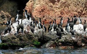 Las preferidas. Las áreas más visitadas fueron las Islas Ballestas (RNSIIPG), la Reserva Nacional de Paracas, el Parque Nacional Huascarán, el Santuario Histórico de Machu Picchu, el Parque Nacional Tingo María y la Reserva Nacional Tambopata. Foto: Andina.