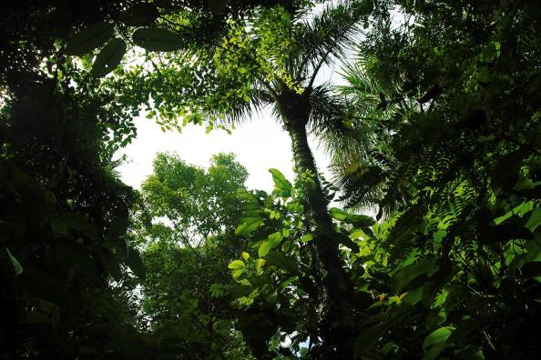 El CREA es un buen espacio para compartir en familia y amigos. Es tener un contacto directo con la Amazonía.