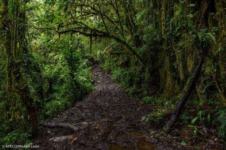 109 especies de fauna y 20 de flora amenazadas a nivel nacional estarán protegidas en esta área, así como nuevas especies para la ciencia, descritas y por describirse. (Michell León / APECO)