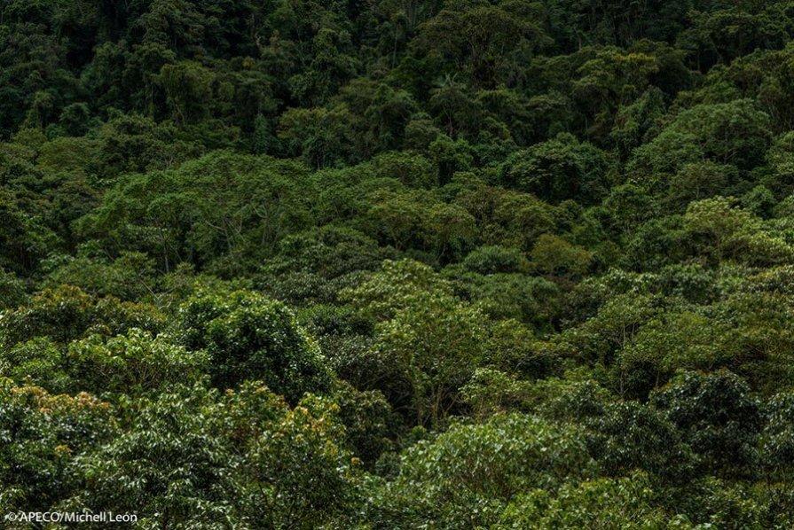 El Sistema de Conservación Regional de Amazonas (SICRE) reconoce los bosques y páramos de Vista Alegre Omia como una de las ocho áreas prioritarias a conservar en Amazonas. (Michell León / APECO)