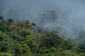 También cuenta con bosques muy húmedos en pequeña extensión pero con gran diversidad especies. (Michell León / APECO)