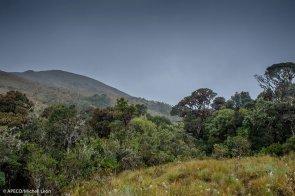 Vista Alegre Omia protege una muestra representativa y viable de los bosques montano bajos de nuestro país, contribuye a la mitigación del cambio climático y ayuda a mantener las reservas de carbono en el bosque. (Michell León / APECO)