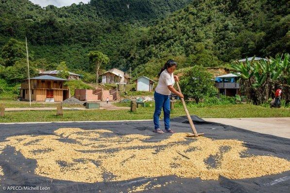 Este bosque protege, además, una ruta histórica y brinda nuevas oportunidades a población del área. (Michell León / APECO)