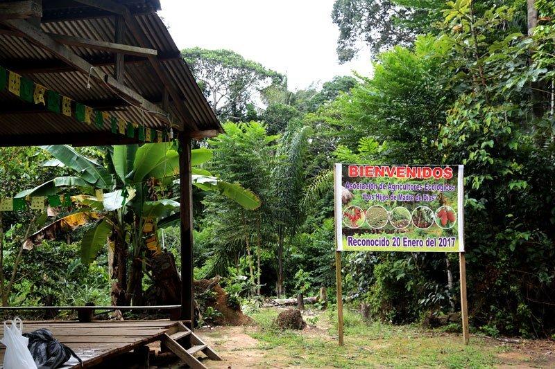 Los invasores crean falsas asociaciones para invadir concesiones como la de Demetrio Pacheco en diversas zonas de la Amazonía de Madre de Dios. Foto: Jaime Tranca / SPDA