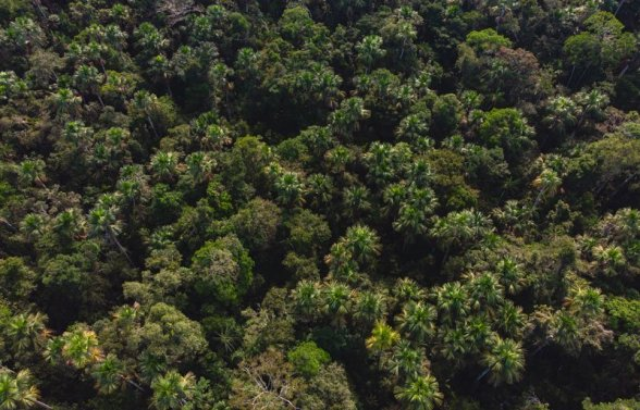 Los paisajes en esta comunidad, ubicada en la zona de influencia de la ACR Alto Nanay-Pintuyacu Chambira, albergan una magnífica biodiversidad. Foto: SPDA/Spectabilis