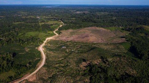 8. Aparte, en las zonas aledañas de la carretera los bosques fueron deforestados con el fin de hacer agricultura.