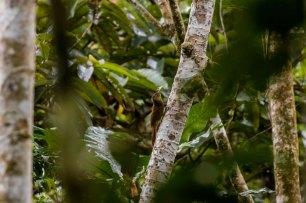 En esta zona se han identificado alrededor de 1500 especies de plantas, lo que la convierte en una de las áreas con mayor diversidad de flora en el mundo. Foto: Spectabilis/SPDA