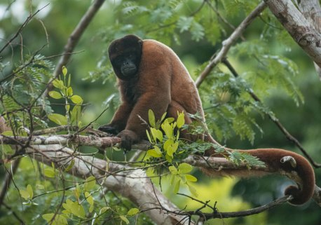 En cuanto a mamíferos, se han registrado 87 especies.Foto: SPDA/Spectabilis