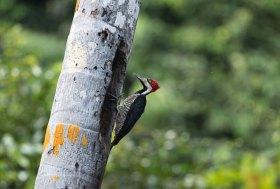 Las aves registradas en el área son al menos 530 espacies.Foto: SPDA/Spectabilis
