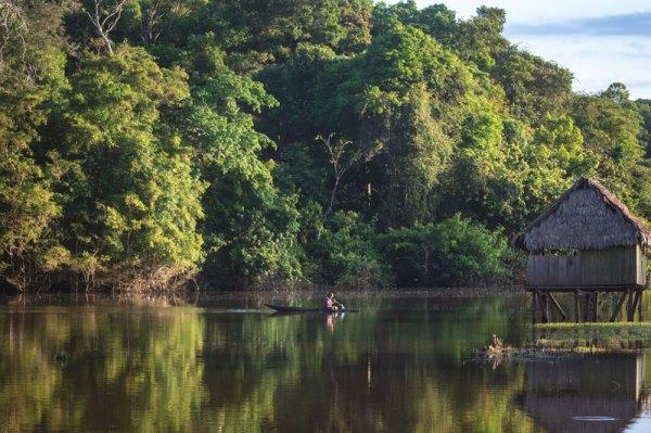 La ACR Maijuna Kichwa protege 391 039.82 hectáreas de bosques, entre los distritos de Napo, Mazán y Las Amazonas (provincia de Maynas), Pebas (provincia de Mariscal Ramón Castilla) y Putumayo (provincia de Putumayo). Foto: Spectabiis/SPDA