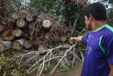 La vigilancia comunal les permite detectar actividades ilegales que ponen en riesgo la biodiversidad que protege el área, como la tala ilegal. Foto: Spectabilis/SPDA