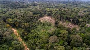 Se puede apreciar las zonas de deforestación cerca a las vías abiertas.